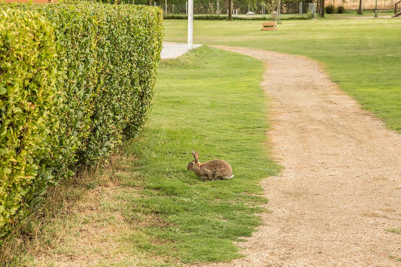 Conejo en el camping el Astral