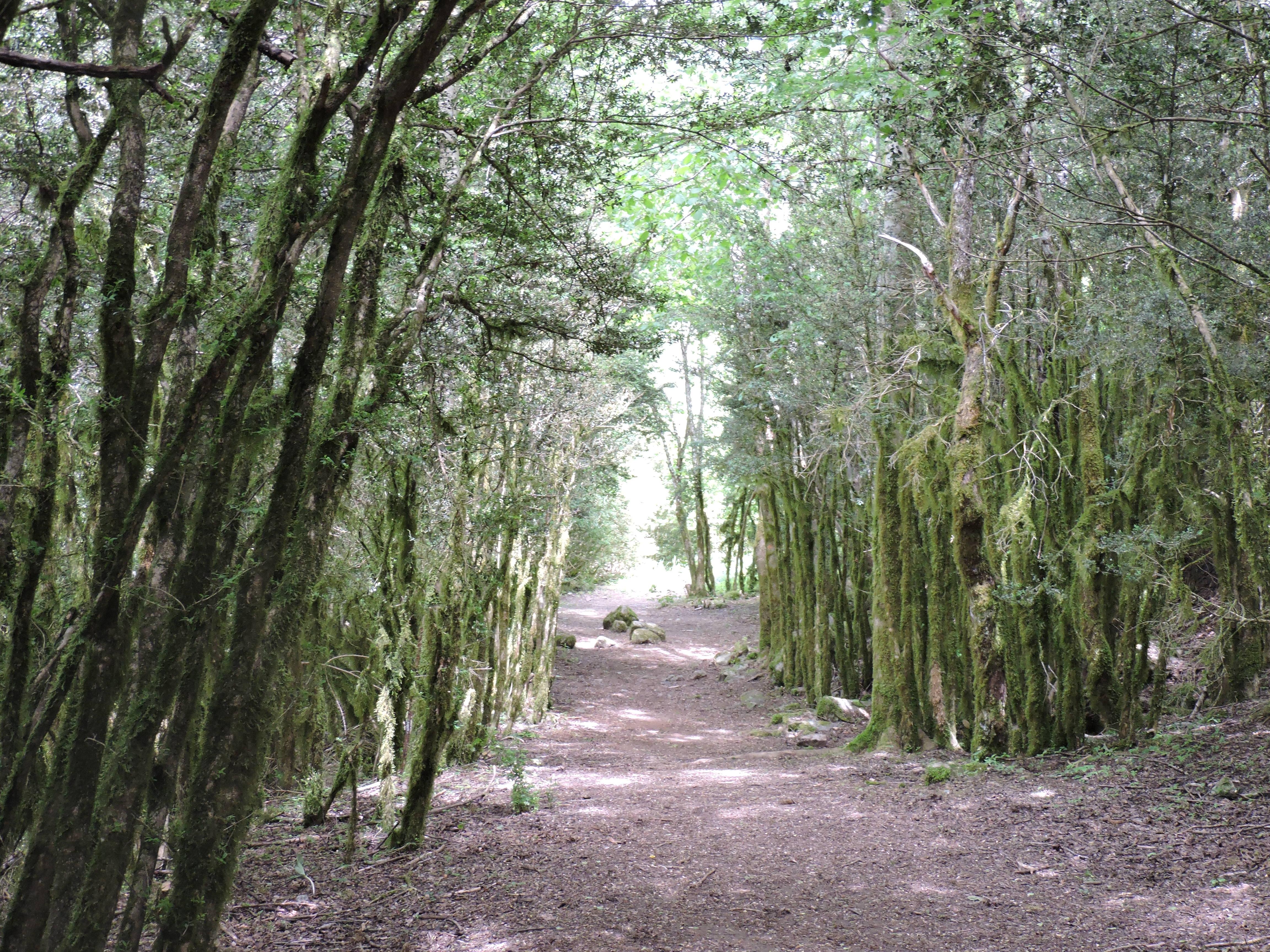 Valle de Tena senderos
