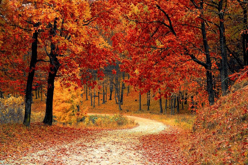 otoño campings