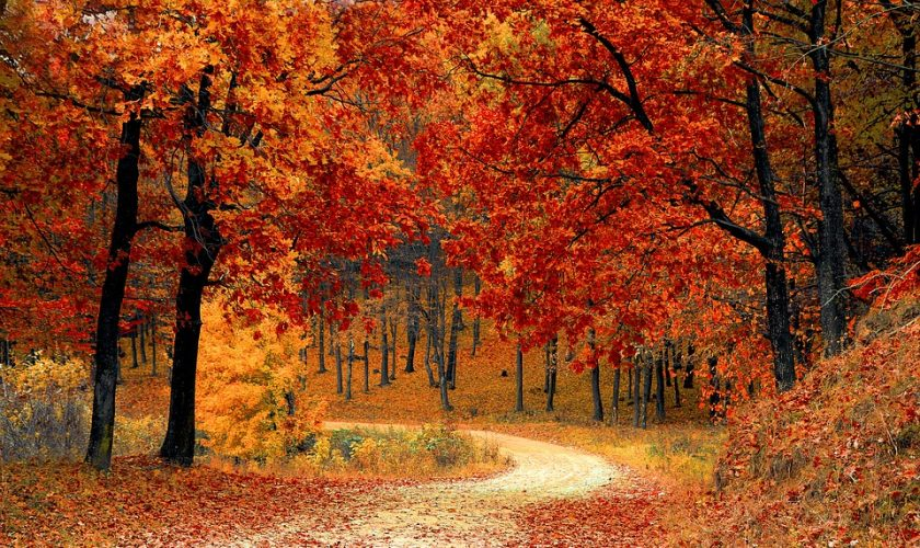 otoño Campingred