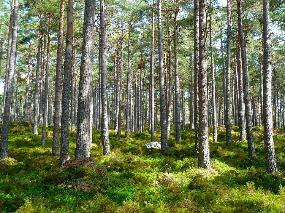 camping y sostenibilidad