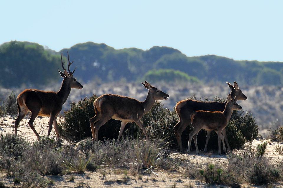 camping Doñana