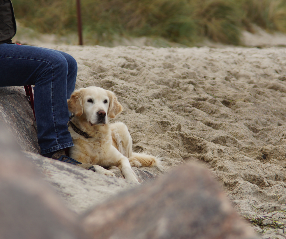 Camping Y Playa Con Mascota Playas Para Ir Con Perros 2019