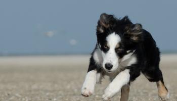 Playas perros