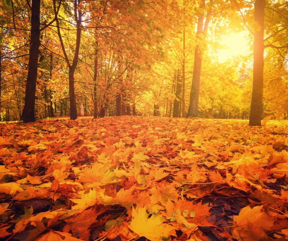 camping otoño