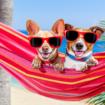 camping mascotas